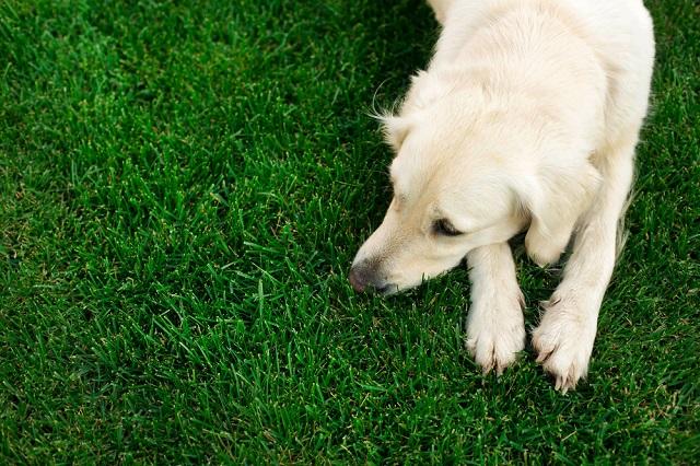 犬の生理の症状や周期がわかる!飼い主が知ってお …