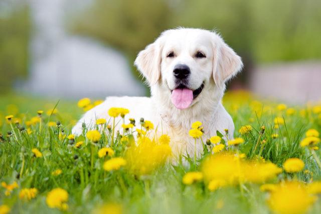 犬の名前 オス 2文字