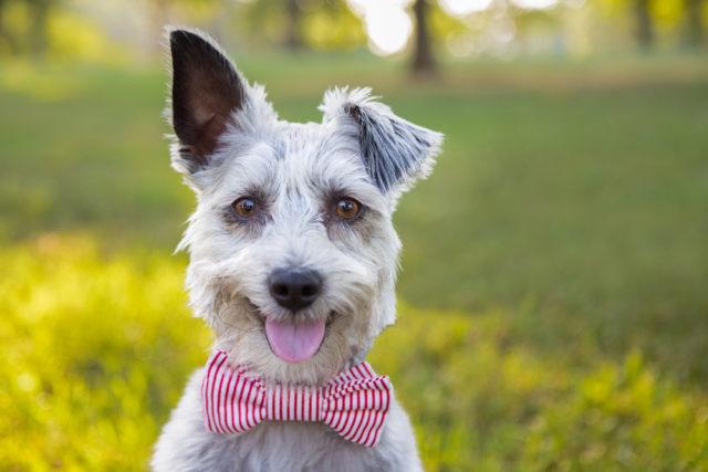 犬のかっこいい 可愛い名前まとめ ランキングよりも響きが大事