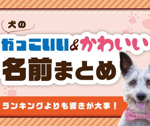【犬のかっこいい&可愛い名前まとめ】ランキングよりも響きが大事!